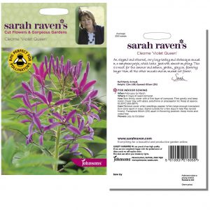 Sarah Raven's Cleome 'Violet Queen' Seeds by Johnsons