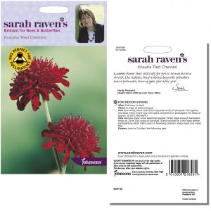 Sarah Raven's Knautia Red Cherries Seeds by Johnsons