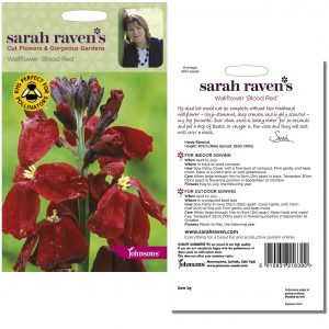 Sarah Raven's Wallflower 'Blood Red' Seeds by Johnsons