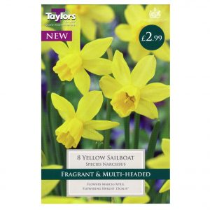 Taylors Bulbs – Species Narcissi Pre-Pack – Yellow Sailboat