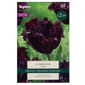 Taylors Bulbs – Tulips Pre-Packs – Labrador