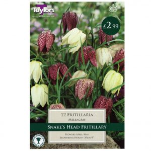 Taylors Bulbs – Fritillaria Meleagris Mixed