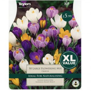 Taylors Bulbs – XL Value Crocus Large Flowering Mixed