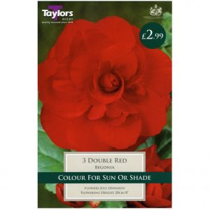 Taylors Bulbs – Begonia Red Double – Pack of 3 Bulbs