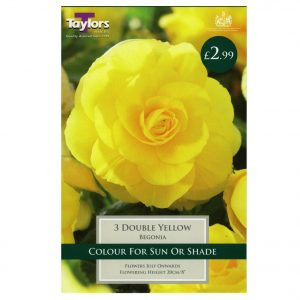 Taylors Bulbs – Begonia Yellow Double – Pack of 3 Bulbs