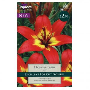 Taylors Bulbs – Asiatic Lilies – Forever Linda – Pack of 2 Bulbs