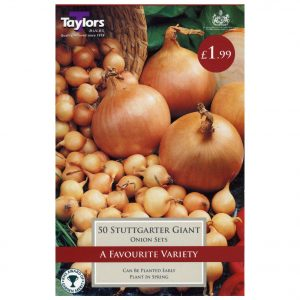 Taylors Bulbs – Stuttgarter Giant Pre-packed Onion Sets – Pack of 50