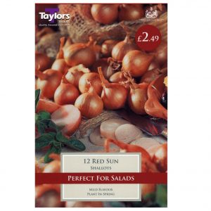 Taylors Bulbs – Red Sun Pre-packed Shallots – Pack of 12